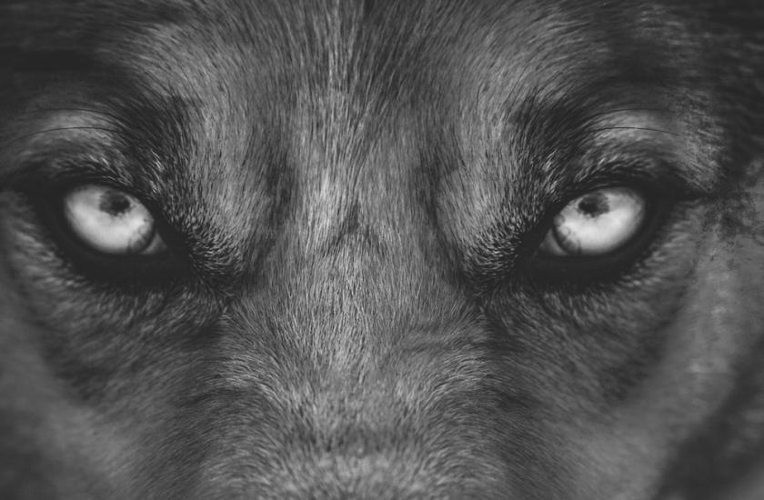 broken-wolves